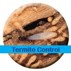 Termite Control & Treatment Services