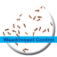 Weeds? Insects? Not sure what it is? Call us. We fix lawn problems.